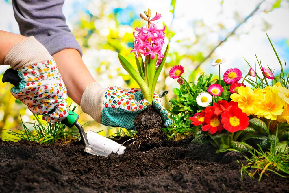 Flower Bed Care Tips