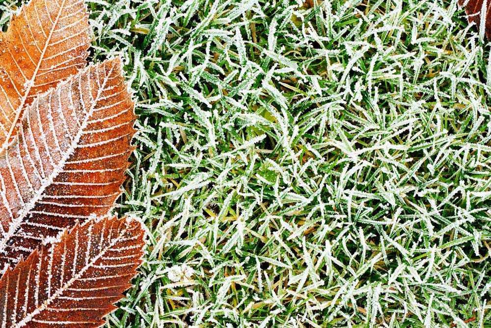 Why and How to Winterize Your Lawn
